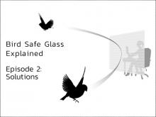 "Bird Safe Glass Explained – Episode II ""Solutions"""
