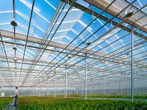 High yield for greenhouses used for agricultural purposes with Saint-Gobain glass