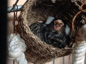 Pilkington Helps Build New Home for Rescued Monkeys